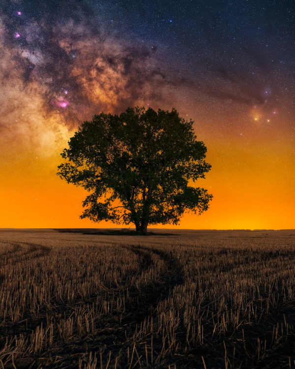 Landscape astrophotography in southeast Saskatchewan. The milky way behind a large tree