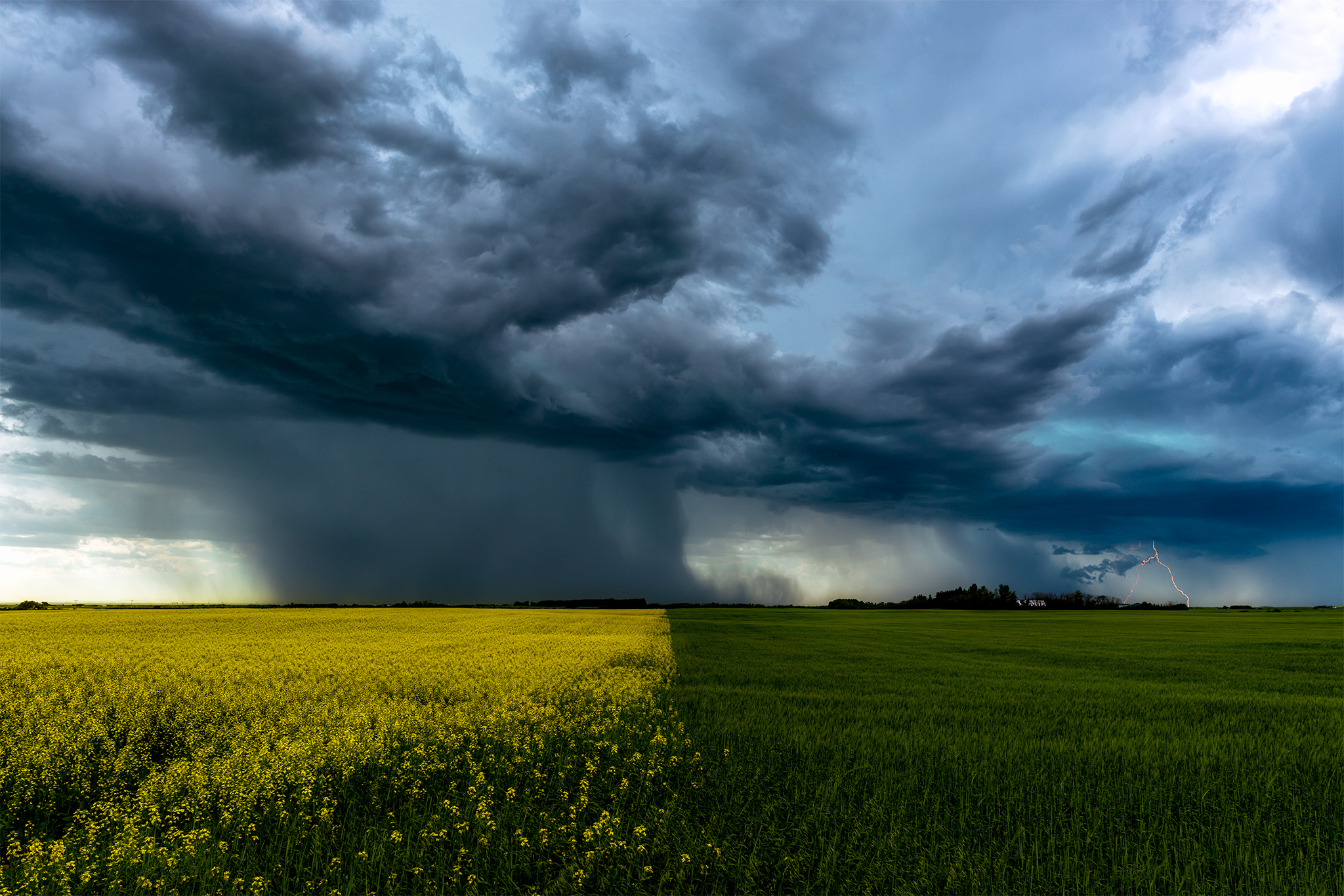 Nature Photography of a canola field in flower on one side, a green wheat field on the other lead to a Saskatchewan storm cloud