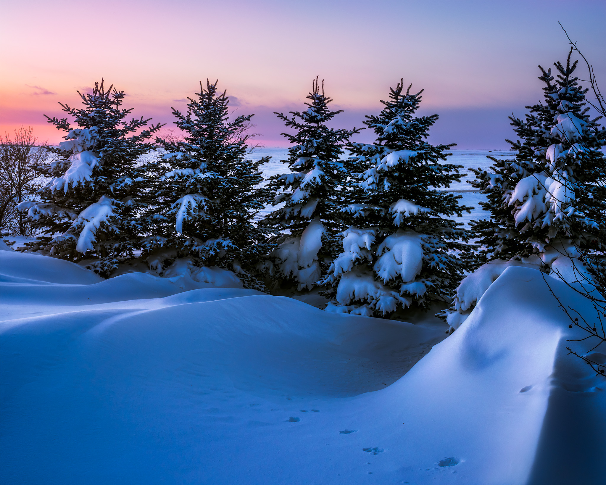Landscape Photography in Saskatchewan. Snow and evergreen trees with a sunset behind