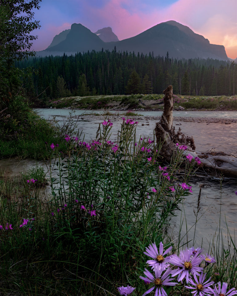 The Bow River carves through Banff National Park. A smokey sunset in the background matches the colours of the flowers in the foreground