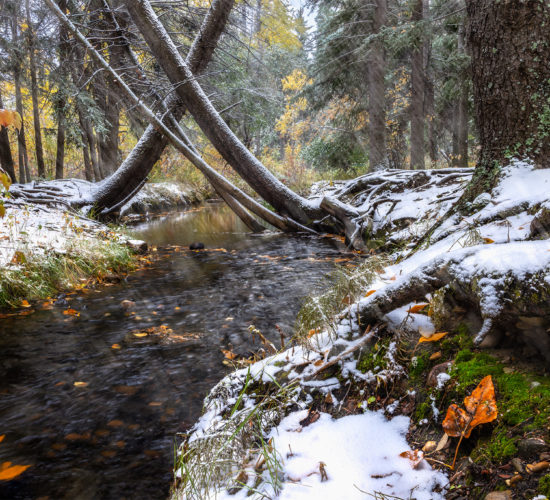 A stream runs through Pine Cree Regional Park, Saskatchewan that leads to a grove of trees.