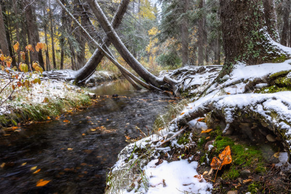 A stream runs through Pine Cree Regional Park, Saskatchewan that leads to a grove of trees.