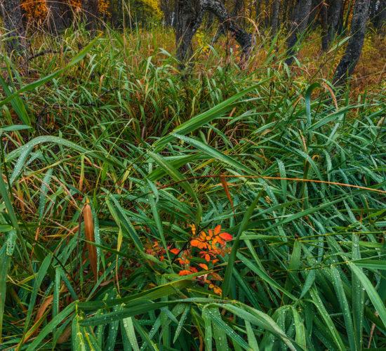 A nature photograph of White Butte Trails, Saskatchewan