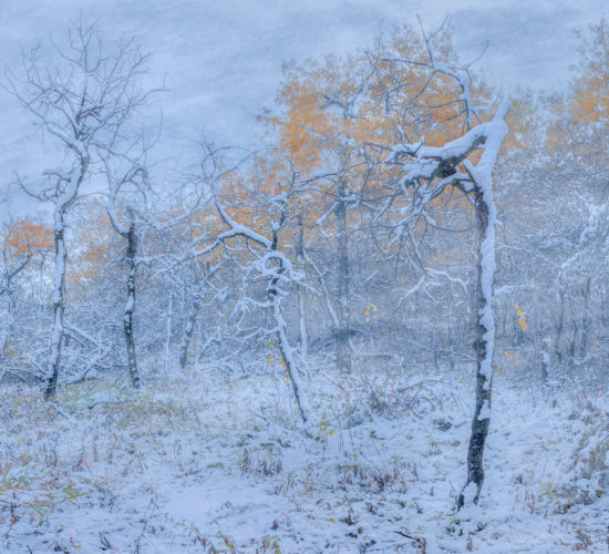 A winter storm in a Saskatchewan woodland called White Butte Trails