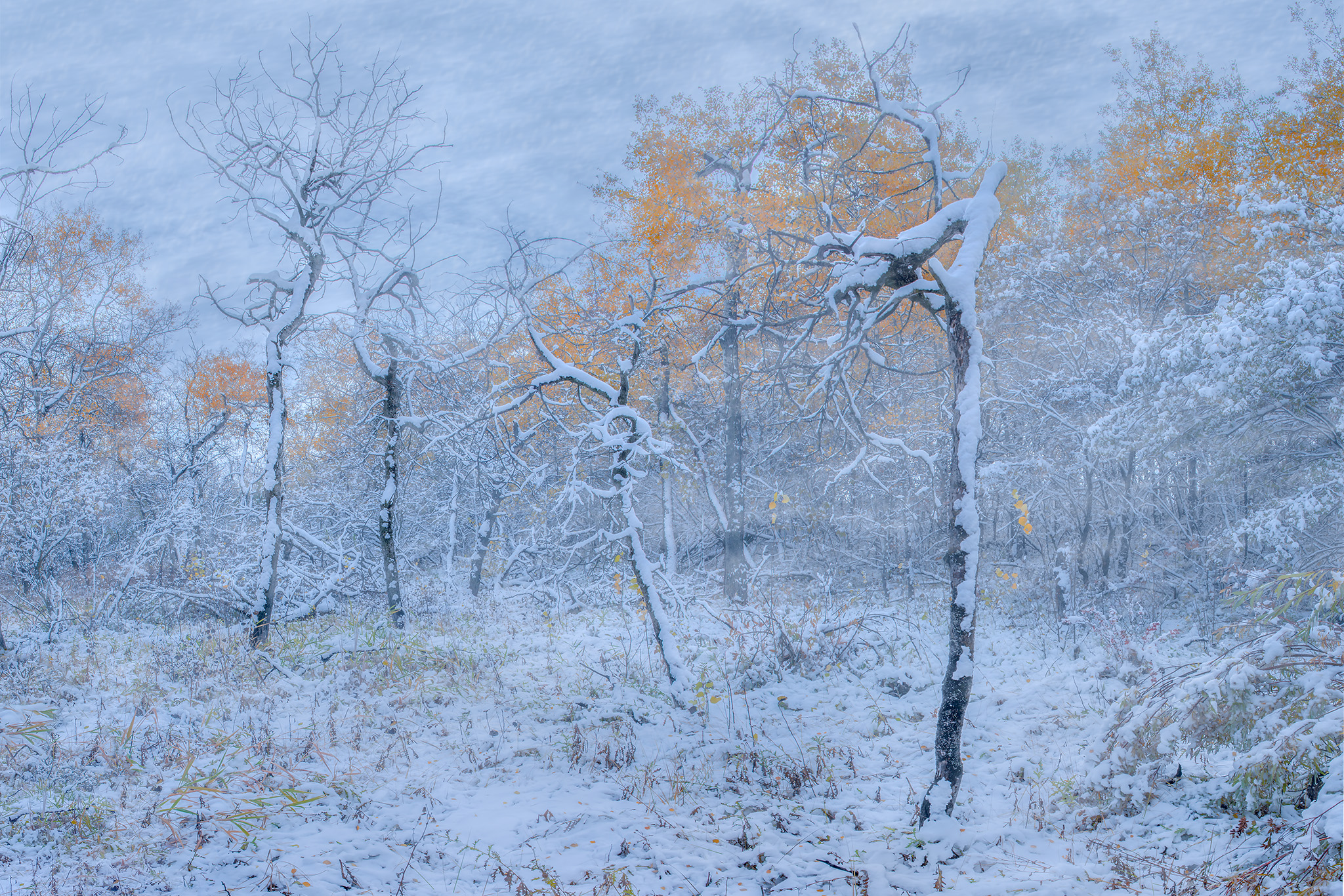 A winter storm in a Saskatchewan woodland called White Butte Trails