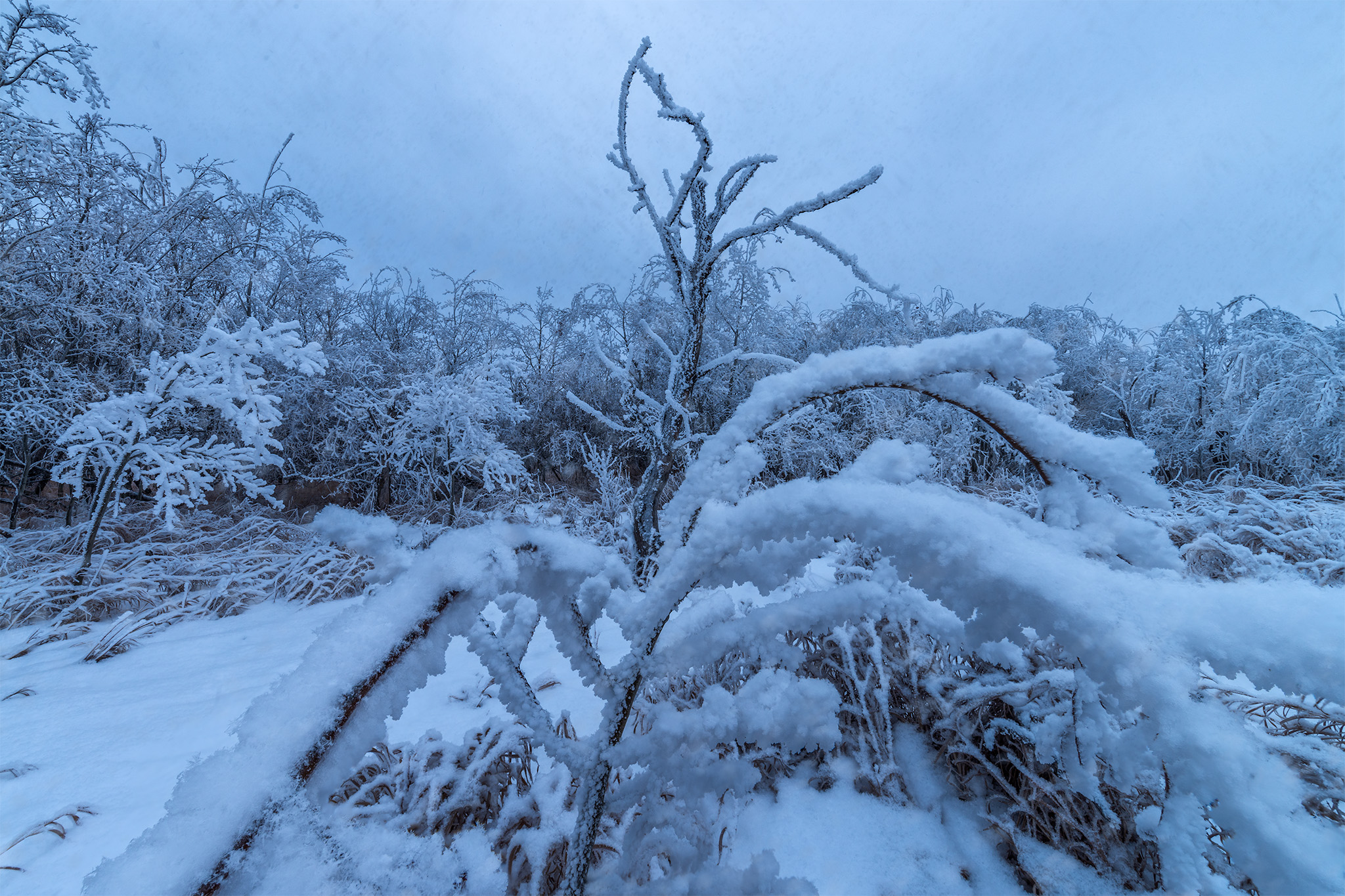 Landscape Photography in White Butte Trails Saskatchewan. Frozen trees under a layer of hoar frost