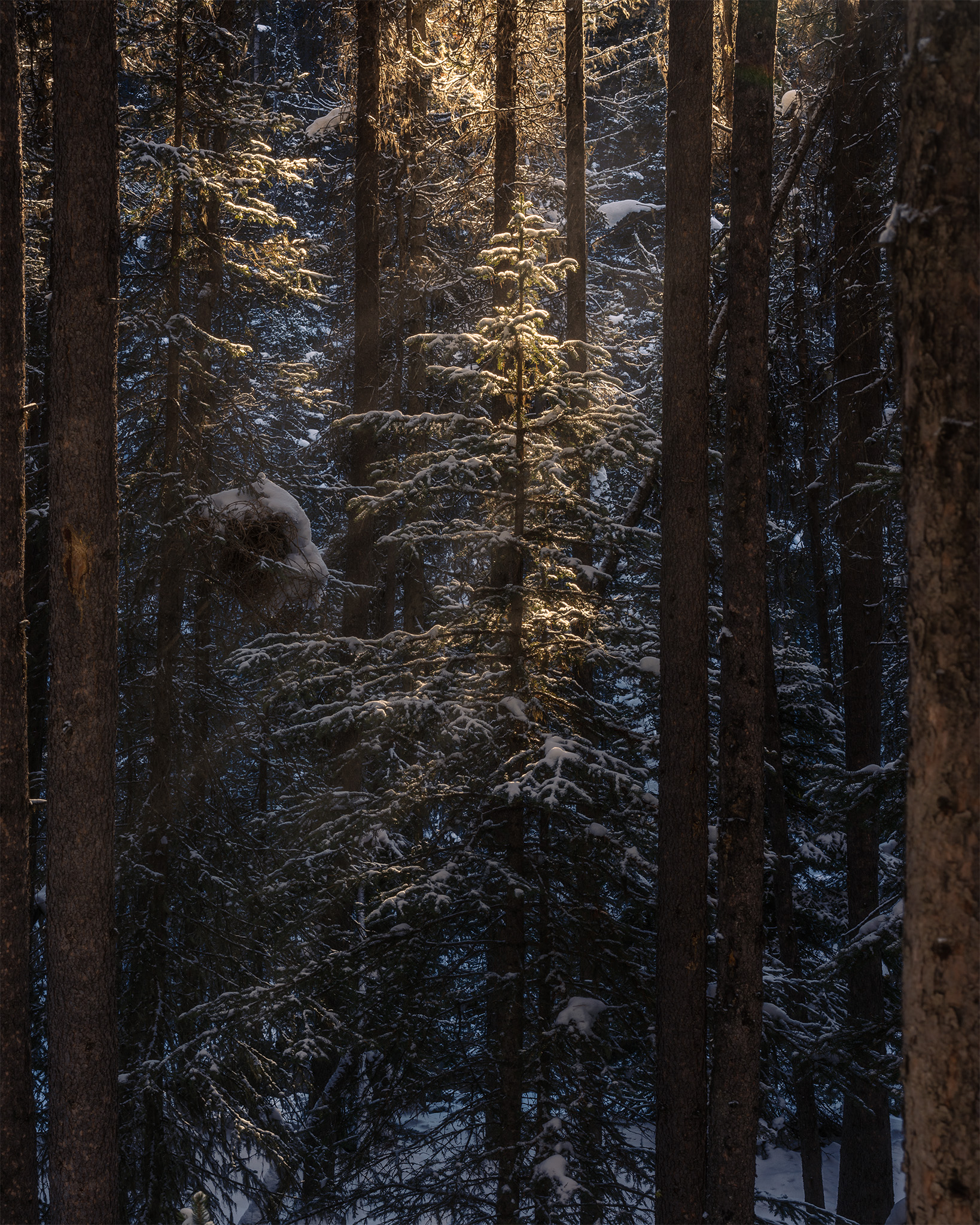 Landscape Photograph of a beam of light invading the forest at Johnston Canyon
