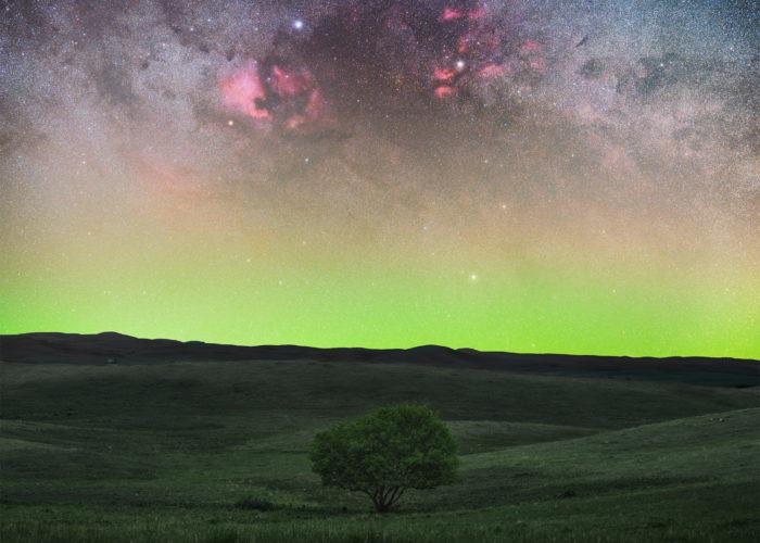Astrophotography in Saskatchewan. The Cygnus region towers over a lone tree