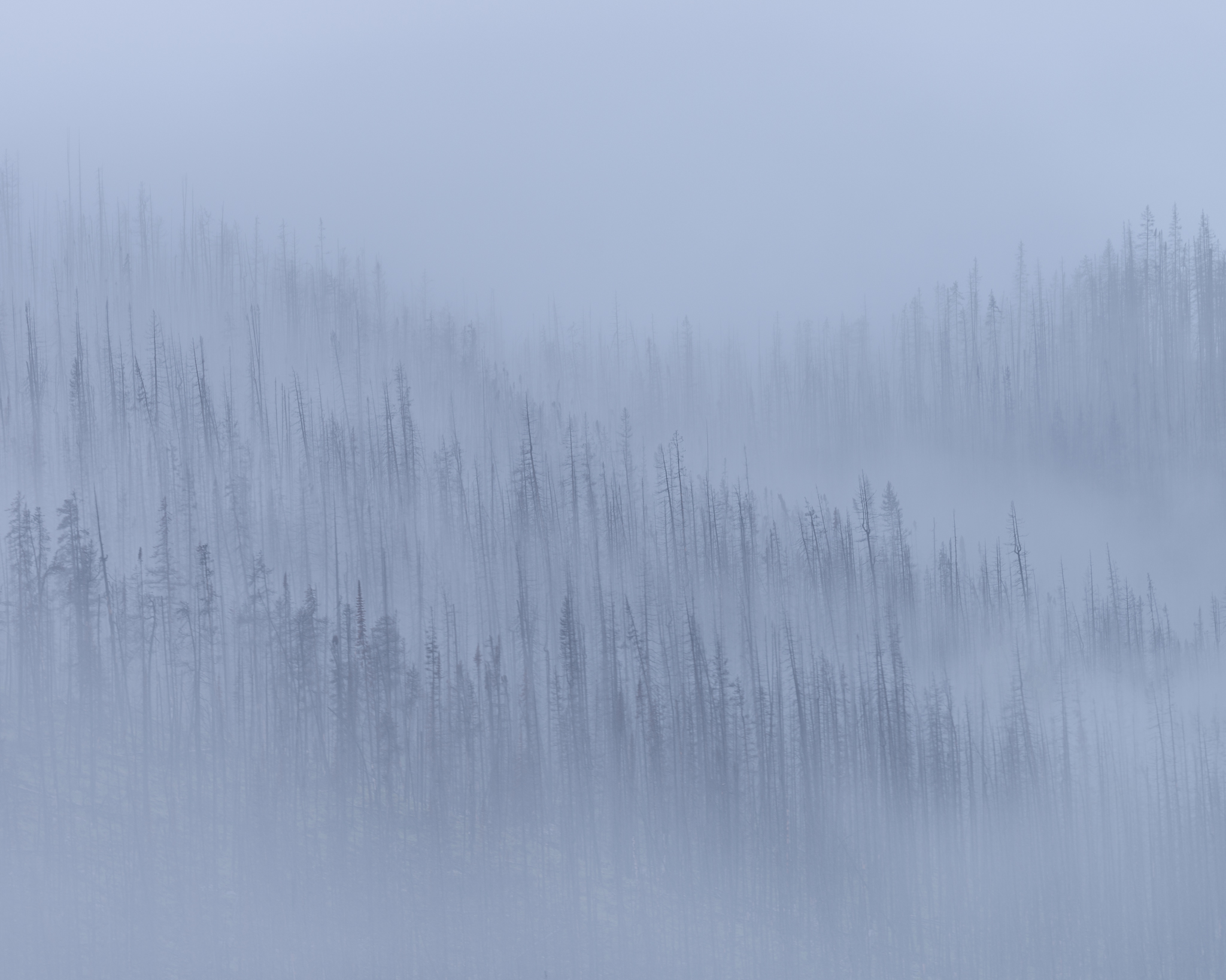 An intimate landscape photograph of burnt mountain forest in Jasper National Park, Alberta in the fog
