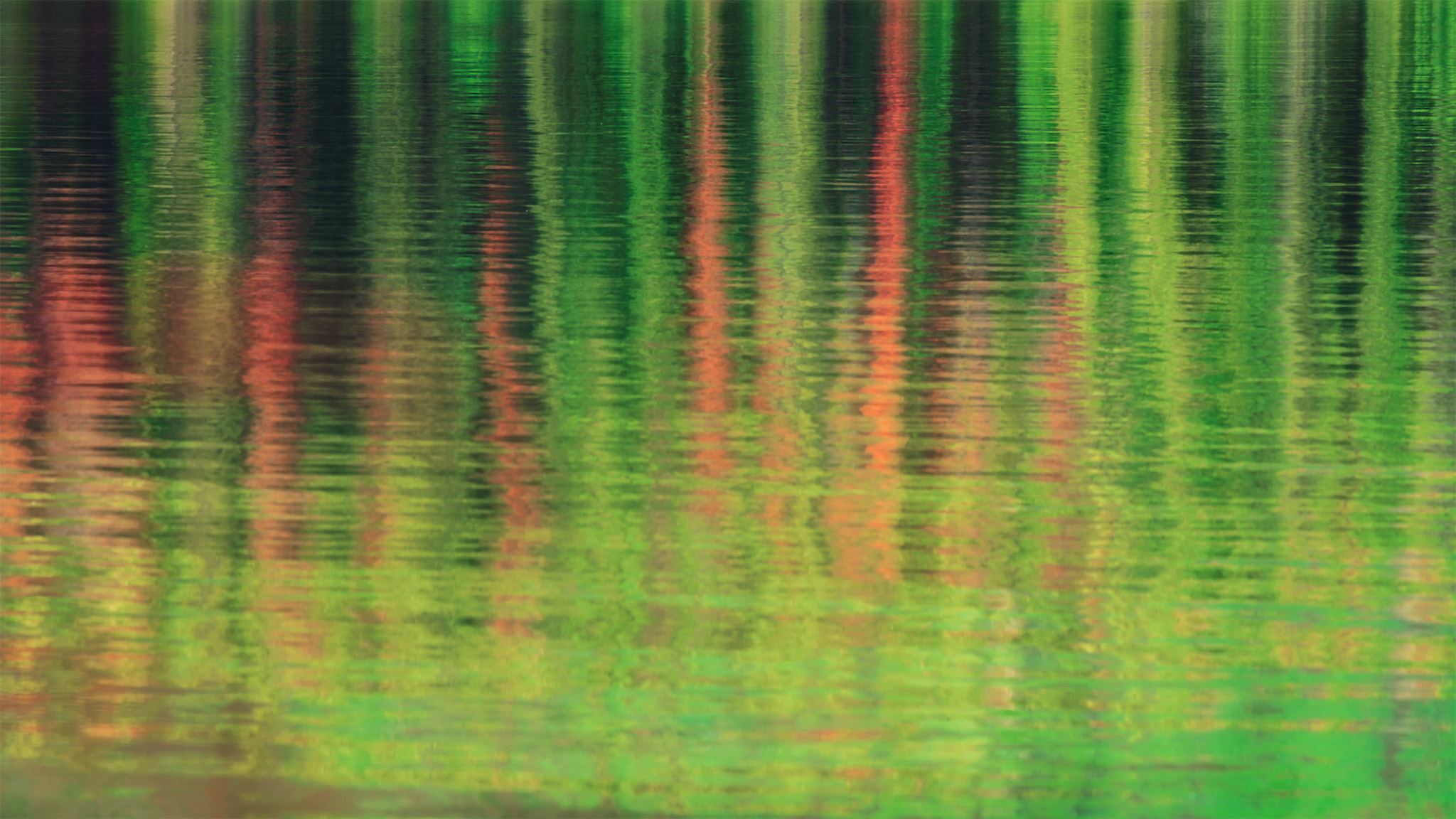 An intimate landscape photo of a reflection of pine trees in Jasper National Park