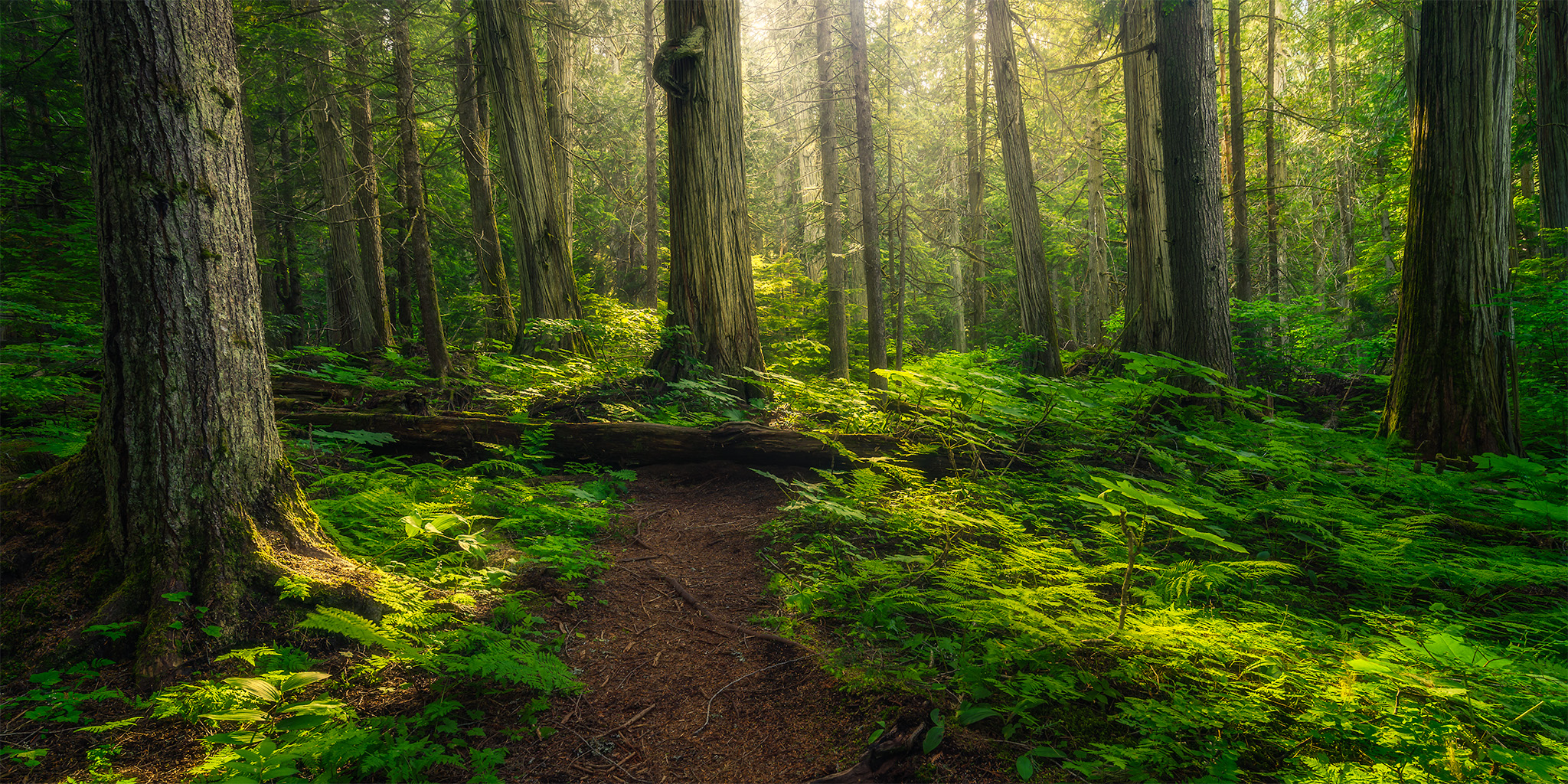 A nature photograph of an old growth forest in British Columbia