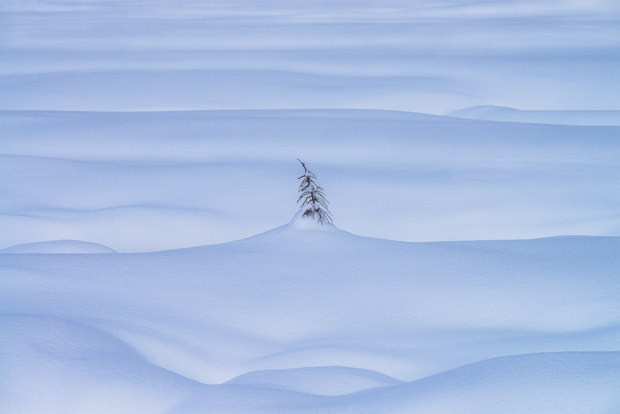 An intimate landscape photograph of a lone tree covered in snow in the Canadian Rockies