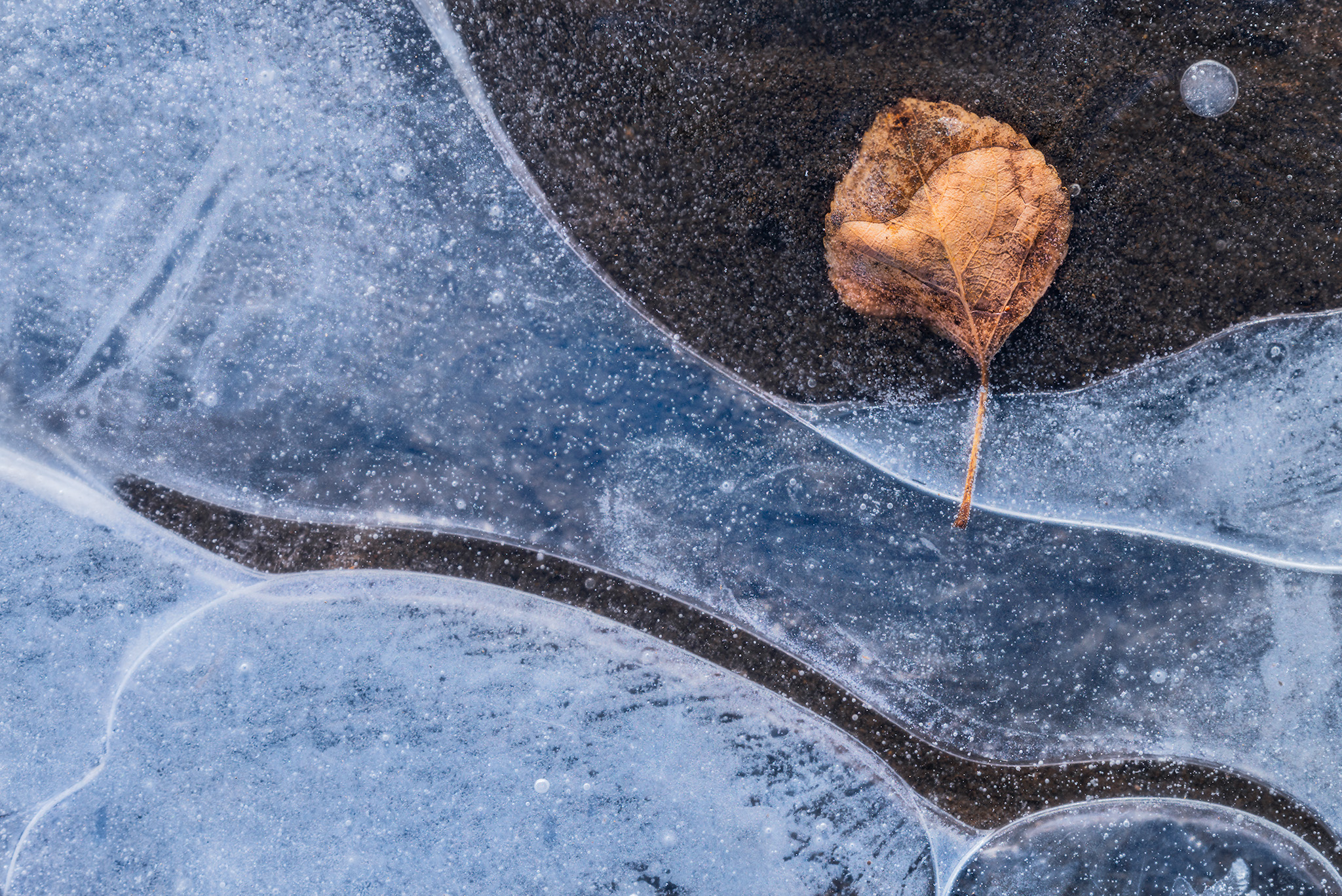 An intimate landscape photograph of a leaf encased in ice