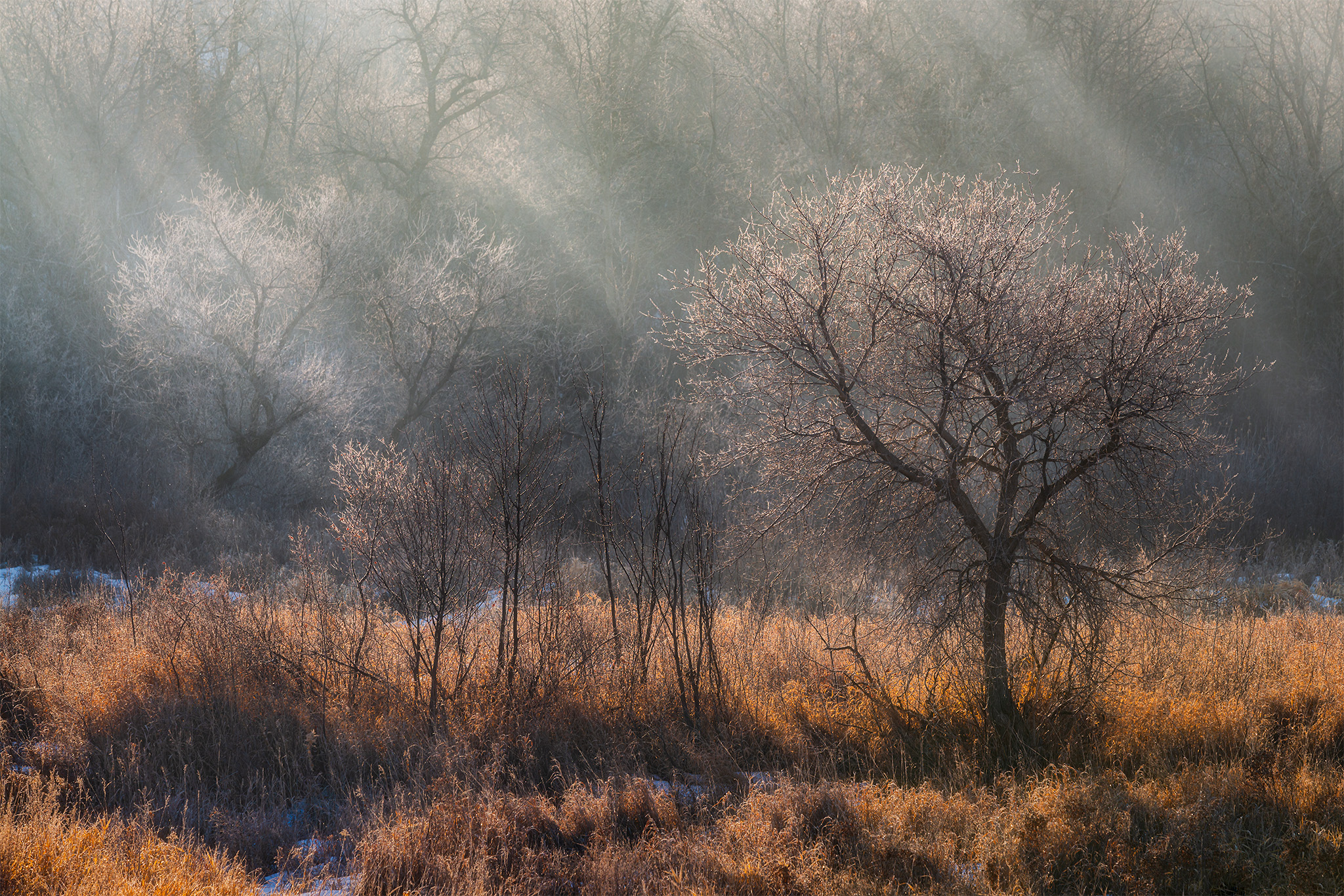 An intimate landscape photograph of a tree in Wascana Trails Saskatchewan getting hit by sunrise