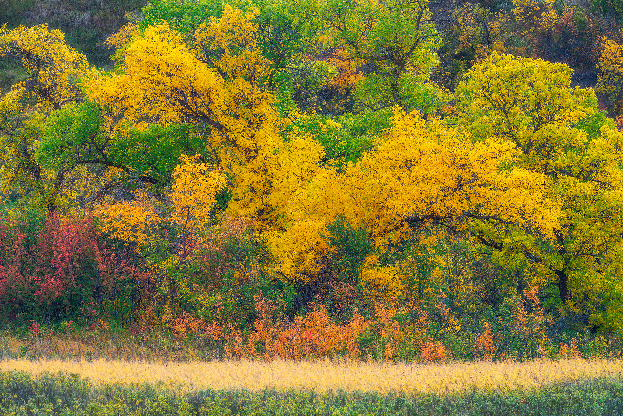 An intimate landscape photograph of fall foliage in Wascana Trails, Saskatchewan