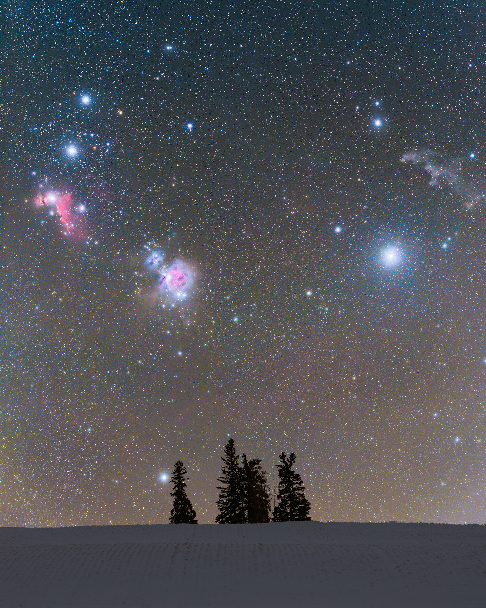 A night photograph of the constellation Orion over a few trees in Saskatchewan in the middle of winter.