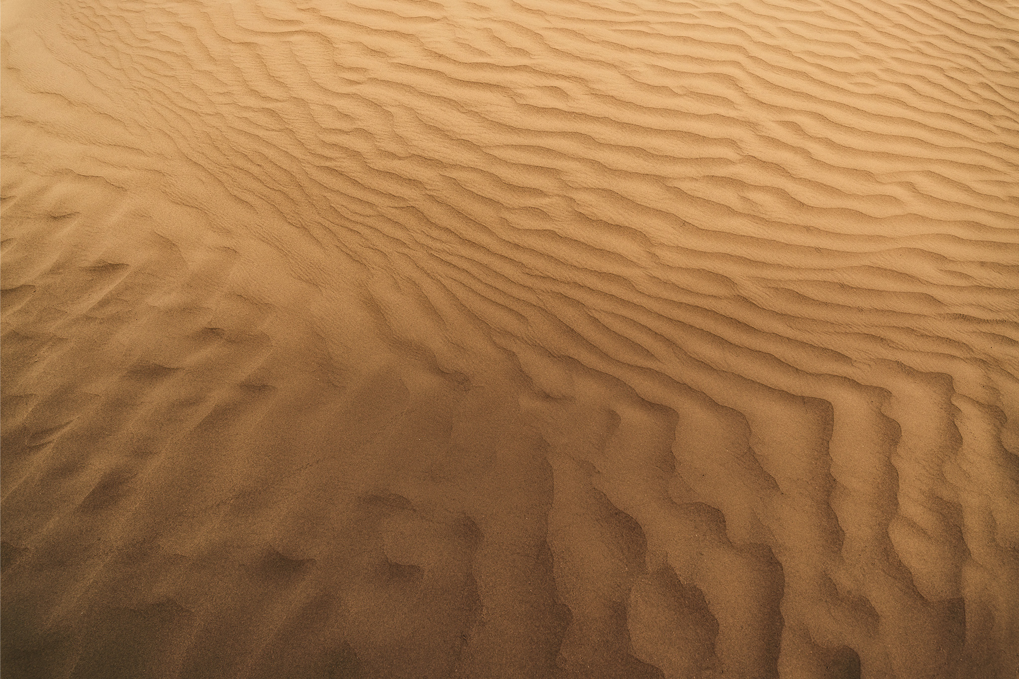 An abstract photograph of a sand dune in The Great Sandhills, Saskatchewan