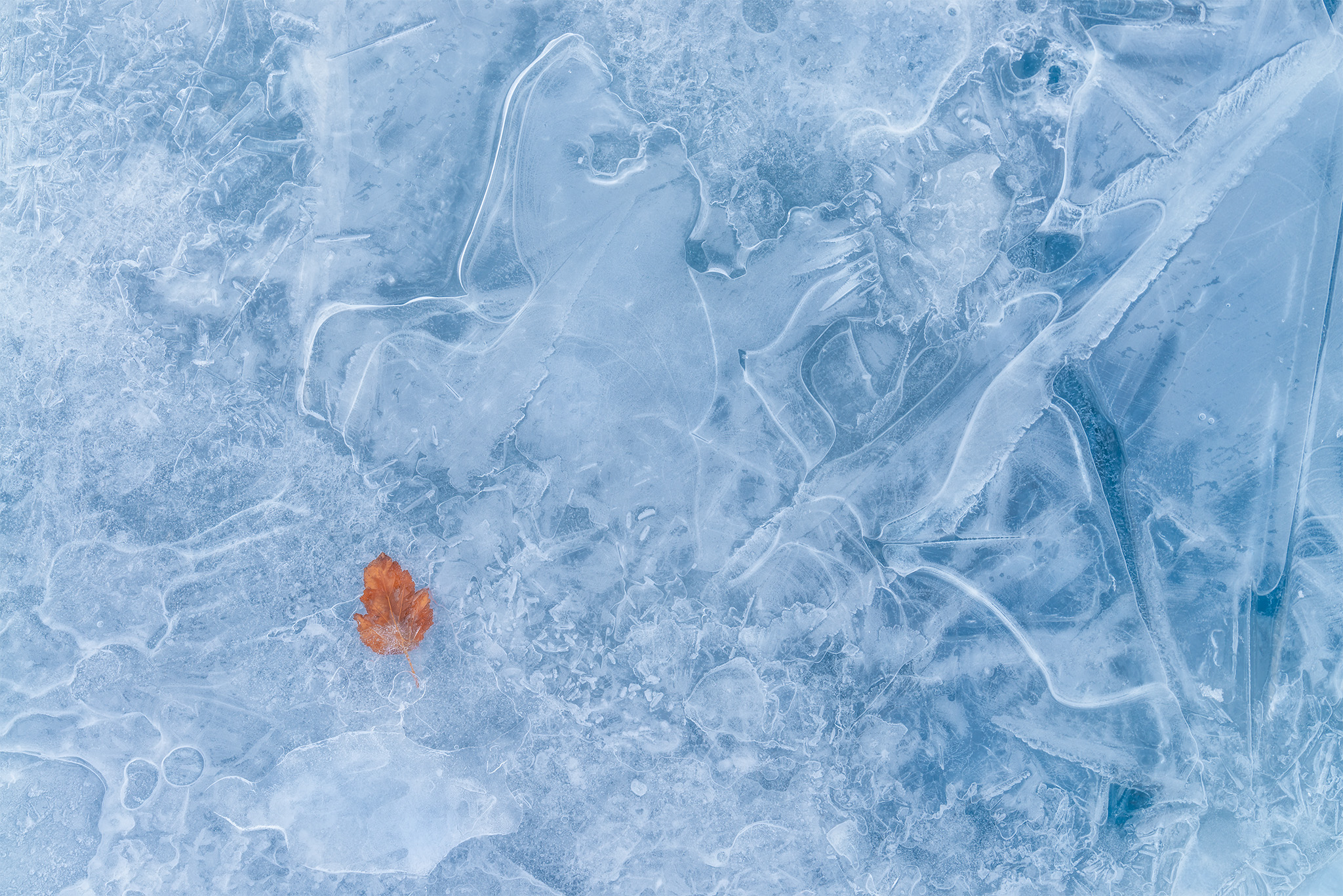 An intimate landscape photograph of a leaf frozen in blue ice in Saskatchewan