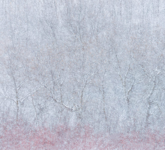 An intimate landscape photograph of trees in a snowstorm in Wascana Trails, Saskatchewan