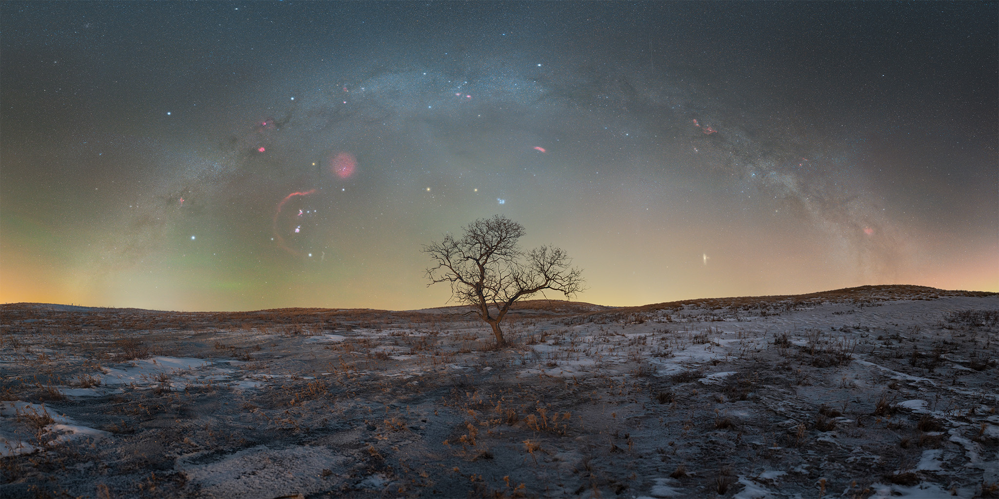 Night Photography depicting The winter milky way arch over a tree in saskatchewan